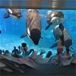 4 Killer whale (StreetView)
