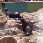 Sea lions (StreetView)