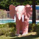 Pink Elephant (StreetView)
