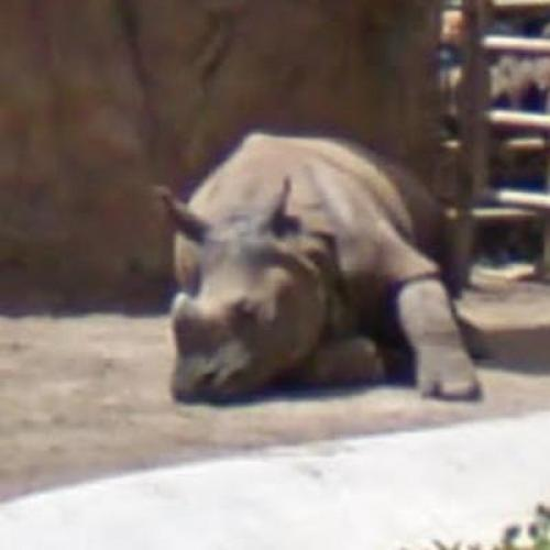 Sleeping Rhinoceros (StreetView)