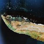 Cape Alexander