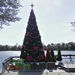 Christmas Tree (StreetView)
