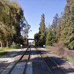 El Palo Alto (tree) (StreetView)