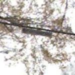 Nutty Narrows Bridge (StreetView)