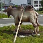 Roundabout CamelMoose (StreetView)