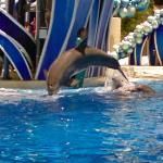 Sea World Dolphin Show (StreetView)